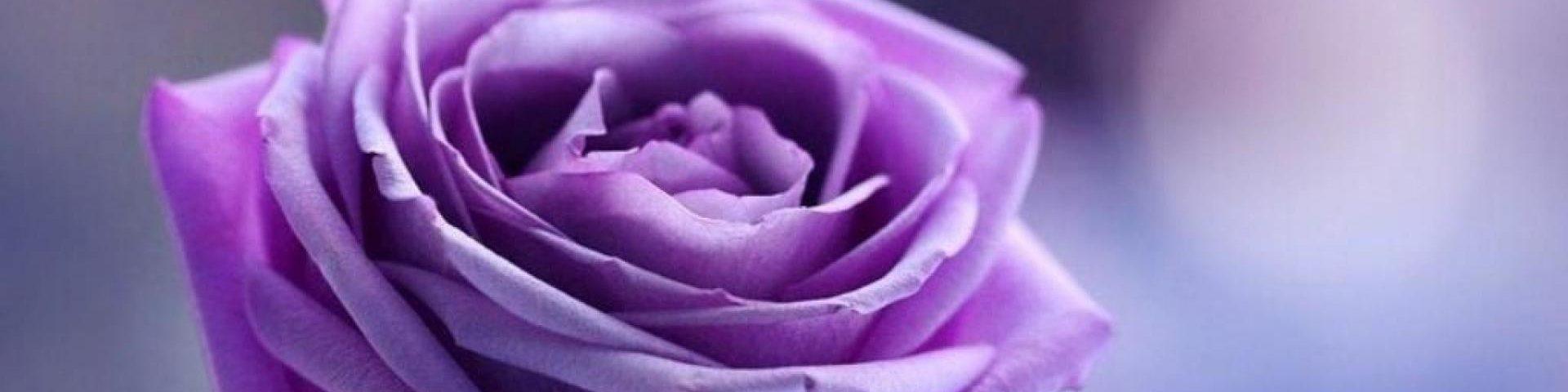 Four Purple Walls: A Book Blog by Tiffany